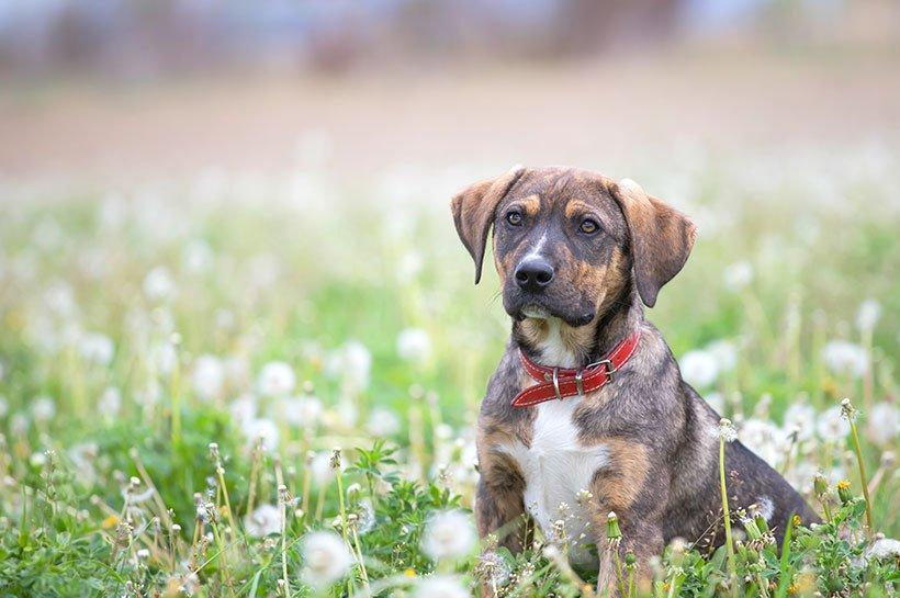 Un chien à l'air triste assis dans l'herbe