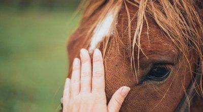 Température du cheval : quand et comment la prendre ? Causes possibles