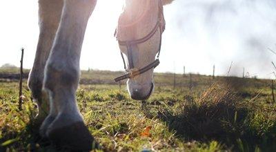 Vermifuger son cheval : quand, comment, quel vermifuge à quelle saison ?