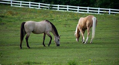Assurer un cheval : tout savoir sur l'assurance mortalité, vol, frais vétérinaires…