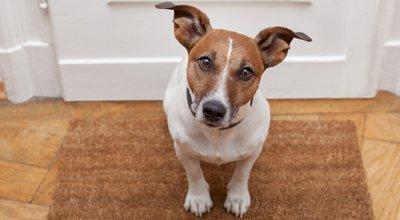 Le coronavirus - Un danger pour les chiens et leurs propriétaires ?