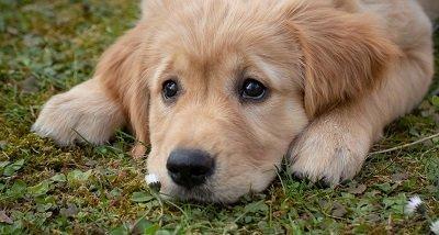 Diarrhée chez le chien, comment l'aborder avec discernement