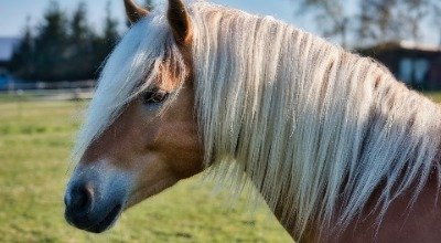 Conseils pour nourrir les chevaux avec des foins