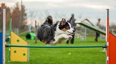 L'agility avec son chien – du sport et de la complicité
