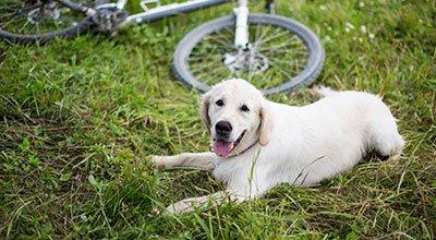 Faire du vélo avec son chien : c'est accessible à tous !
