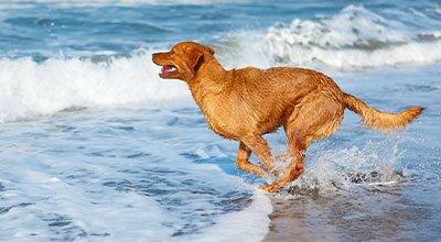 Partir en vacances avec son chien : planifier, préparer et vérifier avec la checklist