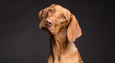 Acheter un chien : se poser les bonnes questions pour faire le bon choix