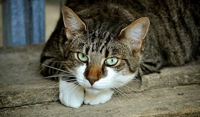 Insuffisance rénale chat