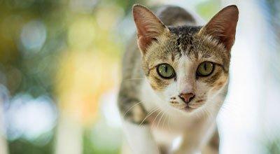 Comment aider votre chat qui halète ?