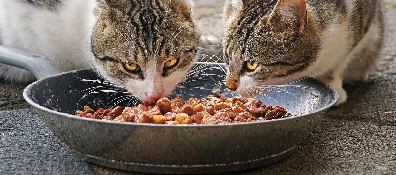 Croquettes pour chat : avantages, inconvénients ? Comment évaluer leur qualité et choisir ?