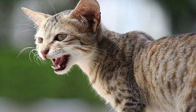 Le langage du chat : comment l'interpréter ?