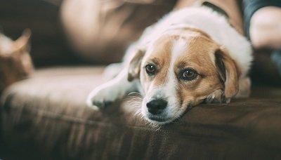 Mon chien se gratte, dois-je m'en inquiéter ?