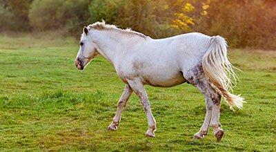 Coups de soleil chez le cheval  : comment les reconnaître, les soigner mais surtout les prévenir !