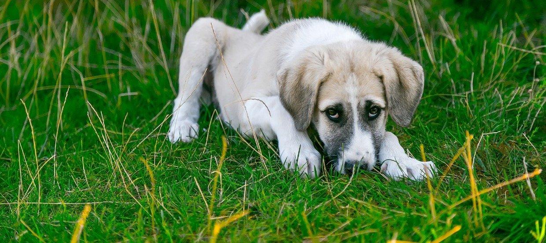Comment sauver votre chien de l'empoisonnement ?