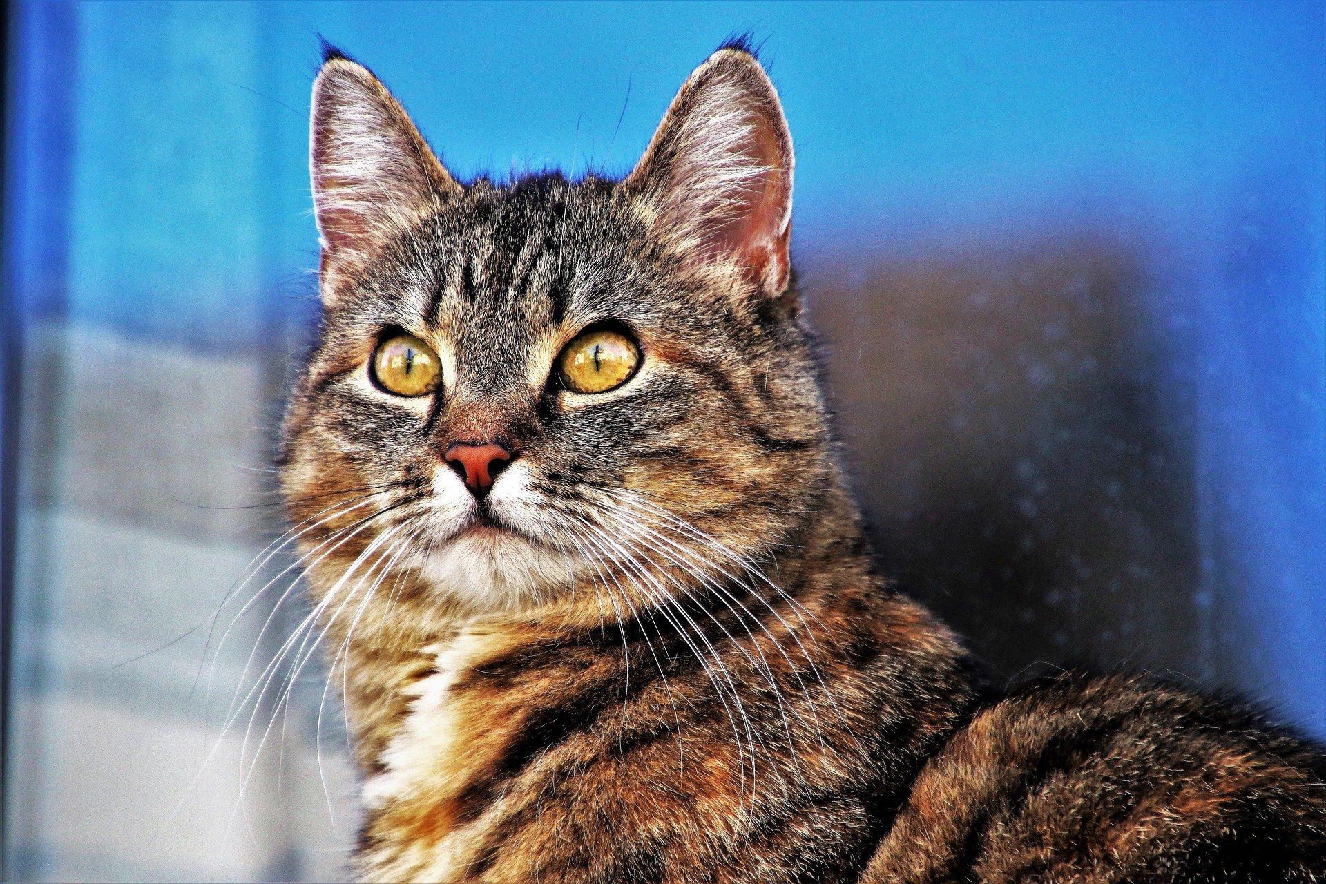 La teigne du chat : la reconnaître, la soigner, la prévenir