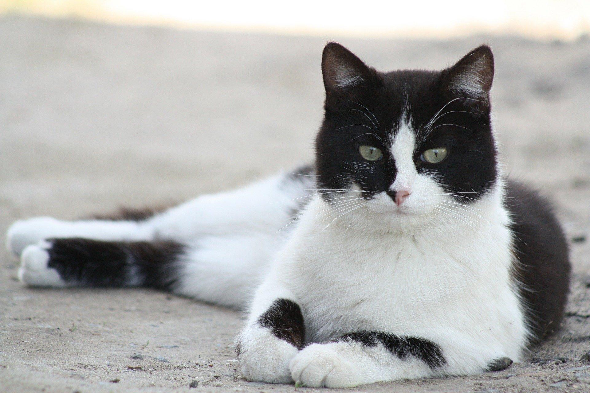 Maladie du chat : 13 maladies félines fréquentes ou dangereuses