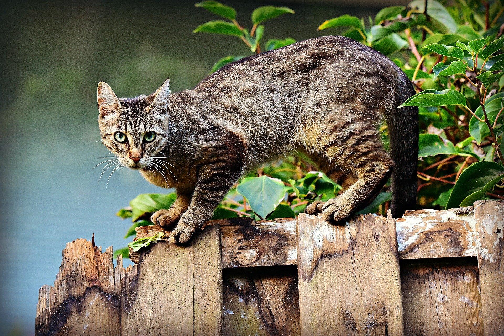 Chien Fait Ses Besoins La Nuit chat qui miaule ▻ pourquoi mon chat miaule? comment le