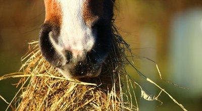 Poids du cheval : pourquoi le peser ? Poids moyen, poids du poney