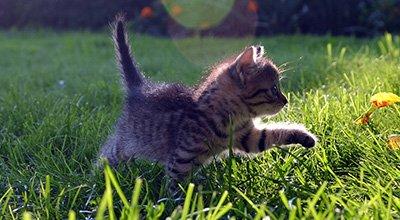 Comment reconnaître et entretenir le bonheur chez le chat ?