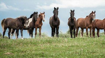 Acheter un cheval : le rêve de tout cavalier