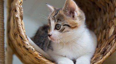 Comment fabriquer et rendre attractif votre arbre à chat ?