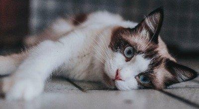 Mon chat à les yeux qui coulent