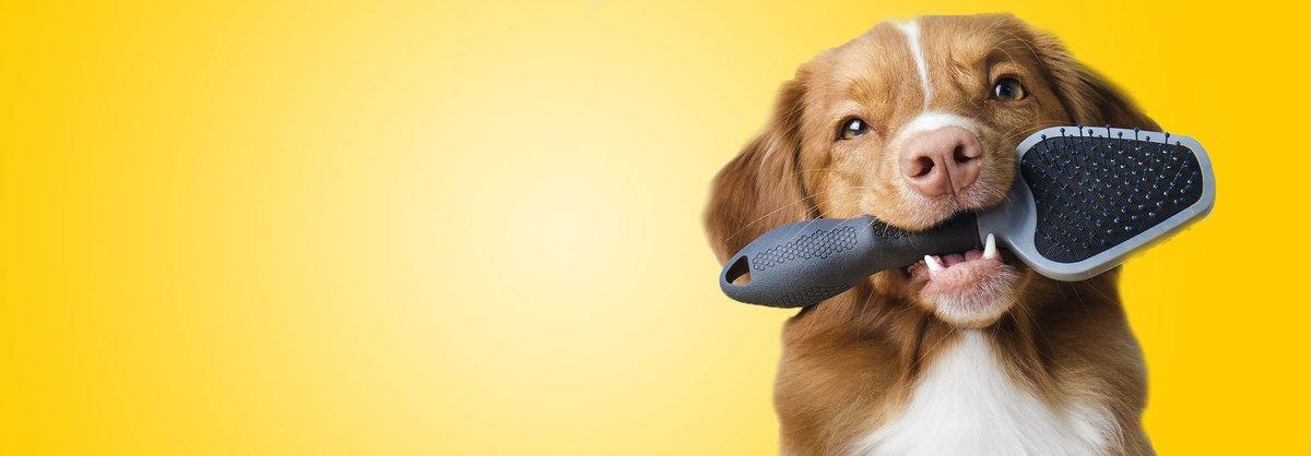 Toilettage du chien : du brossage au lavage, en passant par les soins des dents, des oreilles et des yeux