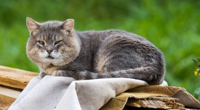 Quelles croquettes pour mon chat senior?
