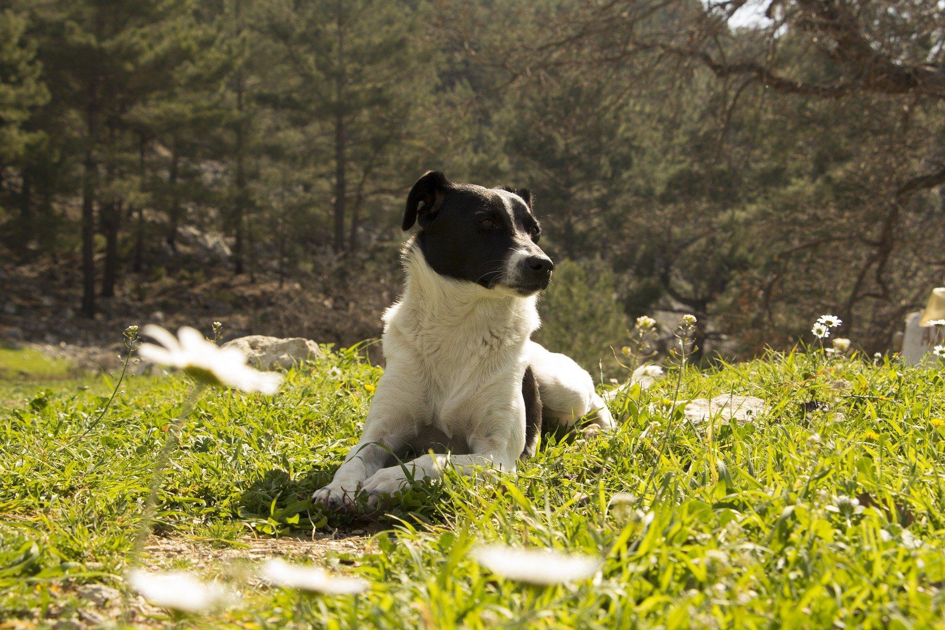 Vermifugation du chien : pourquoi vermifuger, comment et à quelle fréquence ?