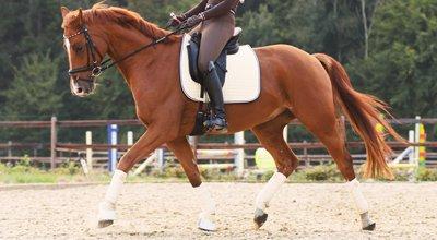 Dresser un cheval : du débourrage au dressage, comment choisir un dresseur ?