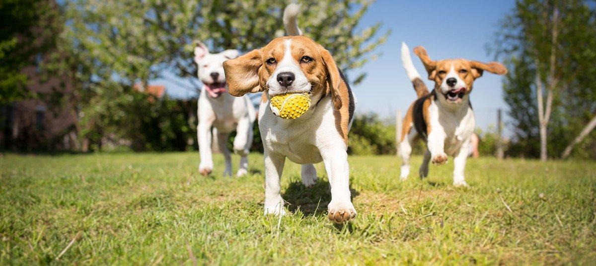 Protégez votre chien au quotidien et en voyage grâce à la vaccination