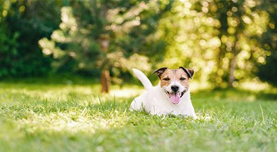 Aliments et croquettes hypoallergéniques : pour les chiens souffrant d'une allergie alimentaire ?
