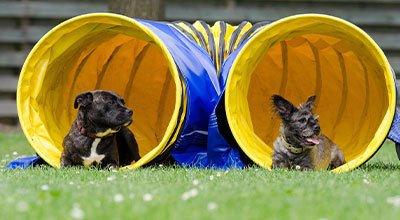 S'inscrire dans un club canin : une décision importante pour une relation réussie