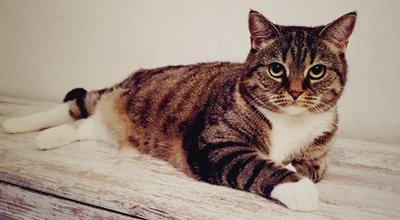 Mon chat a la diarrhée: pourquoi? Que faire ? Comment la prévenir ?