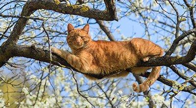 Comment retrouver un chat perdu étape par étape ?