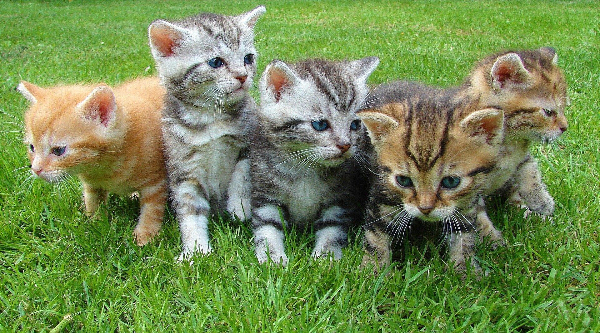 Adopter un chaton: Comment, quand et de quel âge ? Mâle ou femelle ?