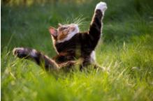 Notre promesse de qualité pour la santé de votre chat