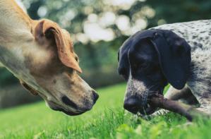 La composition de la nourriture pour chiens