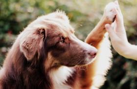 Quelle est la nourriture pour chien la plus adaptée?