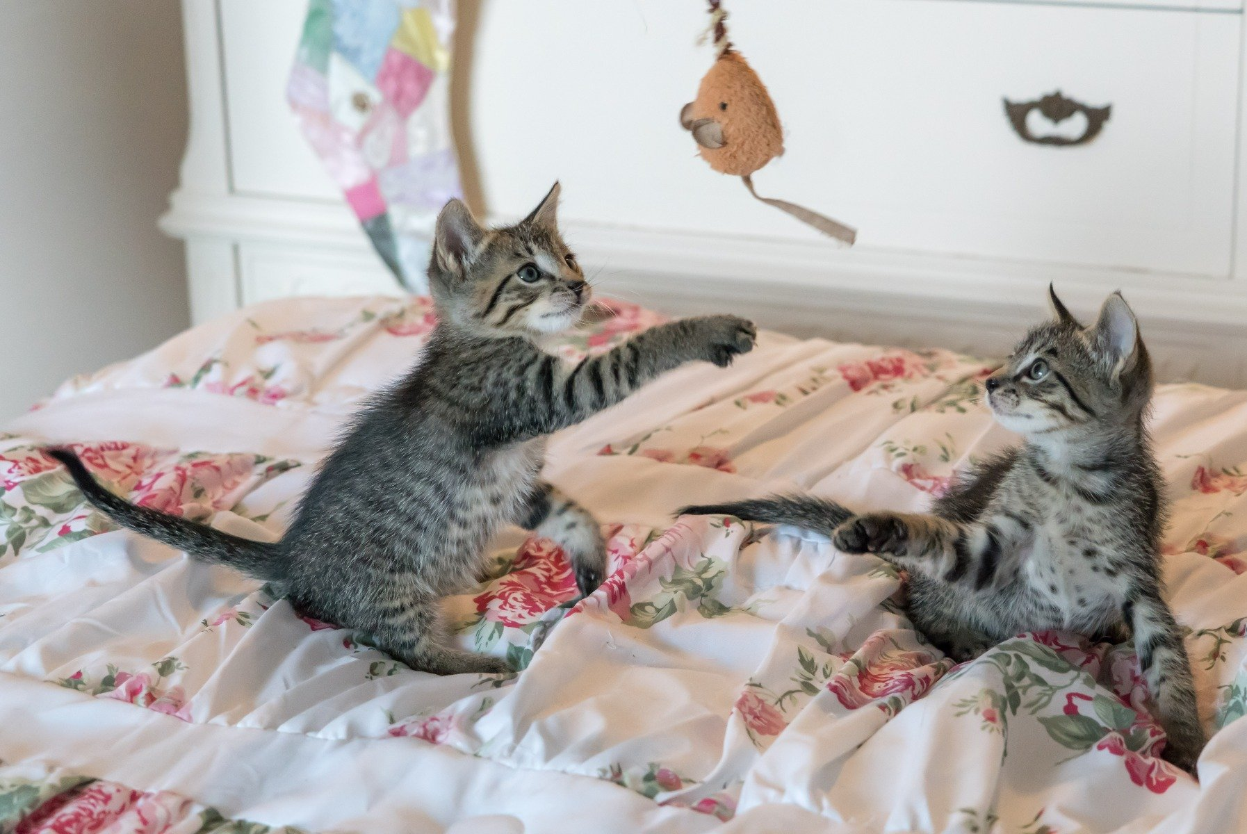 Ces chats jouent avec des jouets pour chats durables