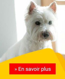 Das Coronavirus bei Hunden: eine Gefahr?